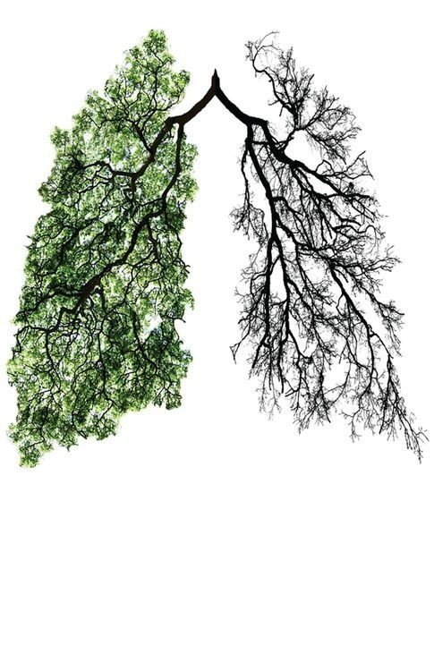 lungs with blood of seasons