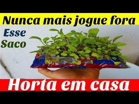 ⭐️❤️O caroço do abacate tem um segredo muito especial - e agora você vai saber qual é! - YouTube