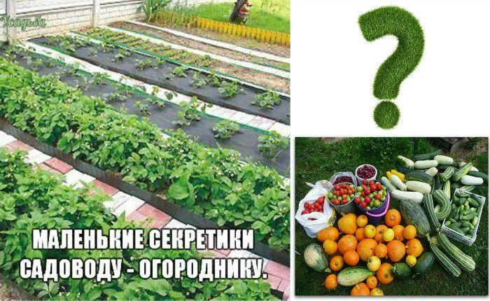 Советы огородникам: как повысить урожай, огород без химии