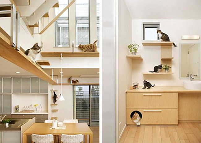 Crazy+Home+Modifications+For+Devoted+Pet+Owners+|+Crazy+Home+Modifications+For+Devoted+Pet+Owners