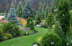 1.  blue spruce 'Glauca' 7.  Pine Mountain 'Winter Gold'  2.  Juniperus 'Stricta' 8. Lavandula angustifolia 'Dwarf Blue'  3.  Spruce rough 9.  Thuja occidentalis  'Salaspils' 4.  Spruce Serbian 'Pendula' 10. Elecampane mechelistny 5.  Thuja occidentalis  'Holmstrup'11. Liatris spicate  6.  Thuja occidentalis  'Dumosa'