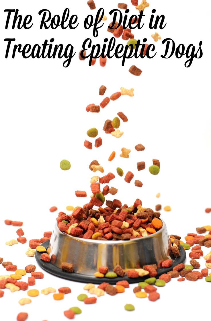 The role of diet in treating epileptic dogs