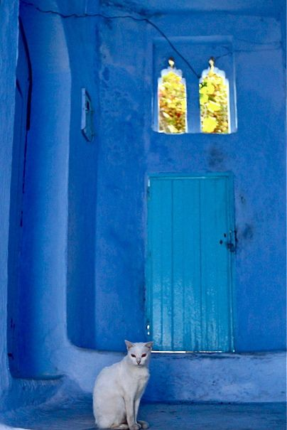 White cat at the blue door in Chaouen, Morocco • photo: Ingrid Stainier on Facebook