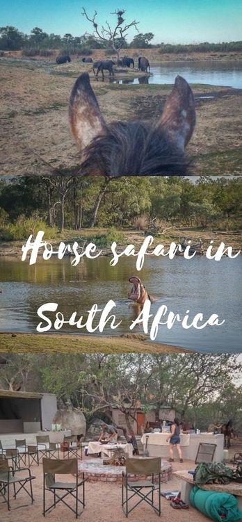 Pferde Safari in Südarfika