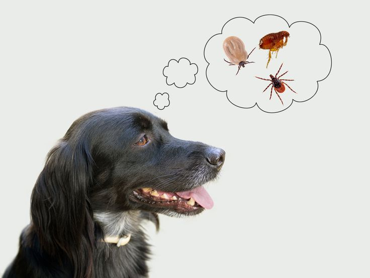 The 10 Best Ways to Get Rid of & Prevent Ticks on Dogs | petMD