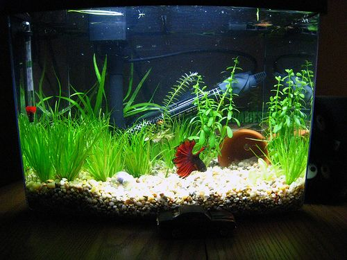 25 best 3 gallon fish tank ideas on pinterest for 2 gallon betta fish tank