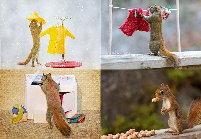 Olhando para os esquilos que invadiam seu quintal, a fotógrafa Nancy Rose teve uma ideia: esconder amendoins e nozes em miniaturas de caixas de correio, máquinas de lavar roupa, espelhos, cabides ou banheiras e captar imagens que parecem ser de mentira. Contando com o instinto do pequeno animal em buscar alimento, a fotógrafa canadense consegue captar os esquilos dando a ideia de estar fazendo tarefas do cotidiano de qualquer ser humano. A série é também um exercício de paciência que merece…
