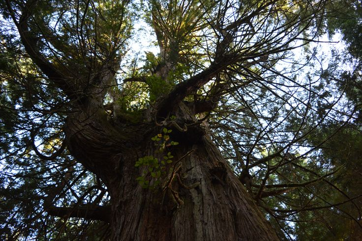 Rain Forest Tofino, BC