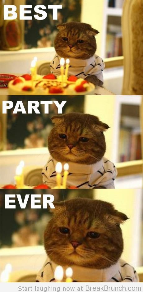 This is the best party ever: Parties Animal, Scottish Folding, Cat Meow, Birthday Cat, Funny Stuff, Sleep, Grumpy Cat, Cat Parties, Alex O'Loughlin