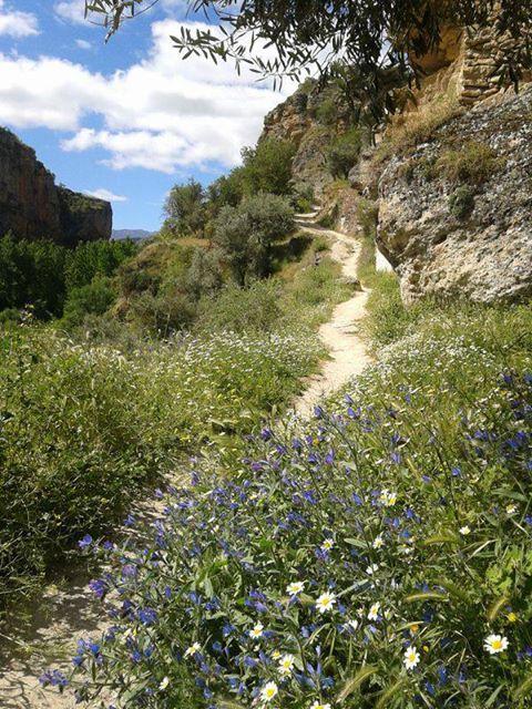 Springtime walk in the Gorge