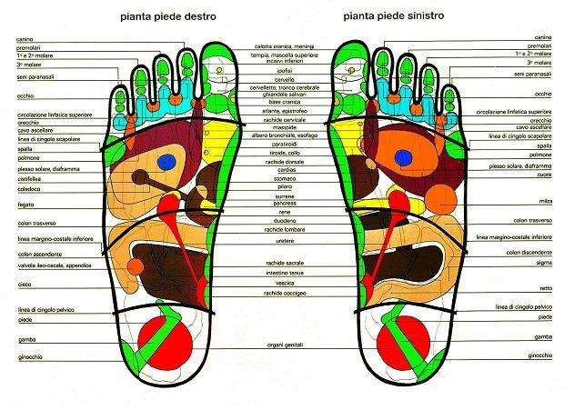 Sapevate che attraverso il massaggio dei piedi è possibile prevenire e curare molte patologie in tutto il corpo? Si tratta della riflessologia plantare, un tipo di massaggio che viene fatto con i pollici delle mani sulla pianta dei piedi e serve a riequilibrare l'energia e il benessere nel nostro corpo: questo dipende dal fatto che …