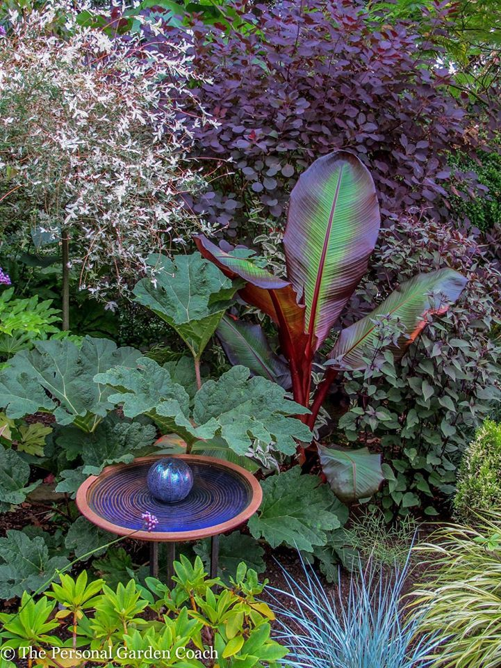 1000 Images About For My Tropical Looking Garden In Zone
