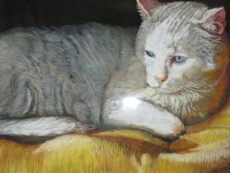 Pastel on Suede Board, cat basking.  Artist Gail Flint.