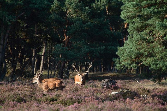 National Park De Hoge Veluwe