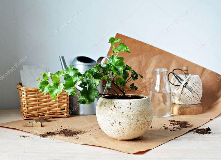 Green Ivy House Pflanze Beige Keramiktopf Gießkanne Kraft – Stockfoto, #Aff, …   – Aesthetic Card