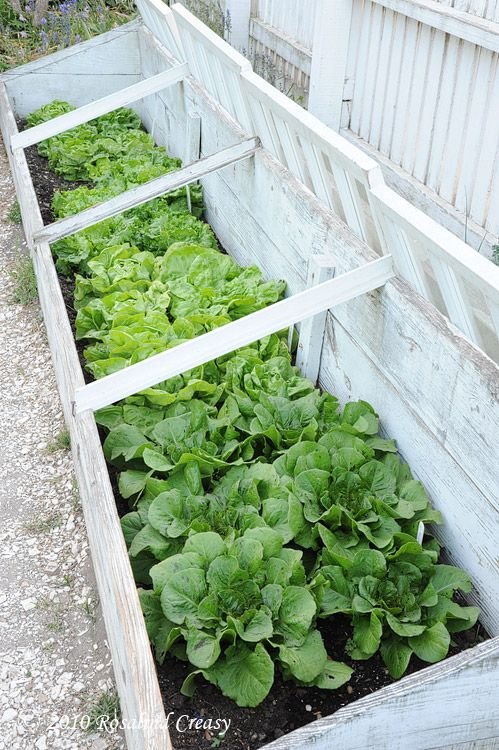 25 best ideas about cold frame on pinterest greenhouse for Best windows for cold climates