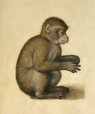Albrecht Dürer. (Alberto Durero): Ape Affen, Animal Art, Albrecht Durer Animal, Aff Monkey, Art Prints, Albrecht Dürer, Albrecht Durer, Awesome Artists, Ape Monkey