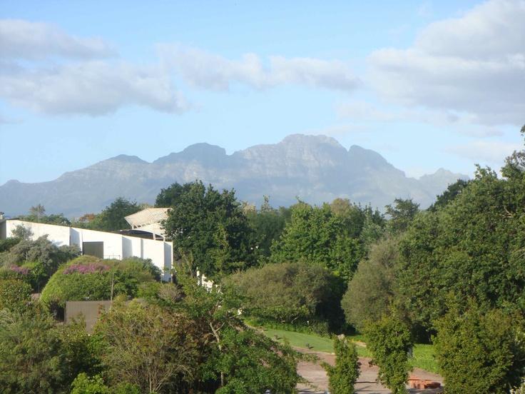 South Africa - Spier winery skyline