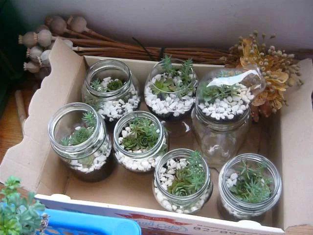 Video: Bacche di tiglio, capsule di papavero essiccate.  Mini terrarium in vasetto, bicchieri e lampadine.  Erbe dal Giardino dei Semplici in barattolo: la liquirizia mi preoccupa... vedrò cosa posso fare.
