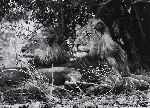 essays about safari adventures