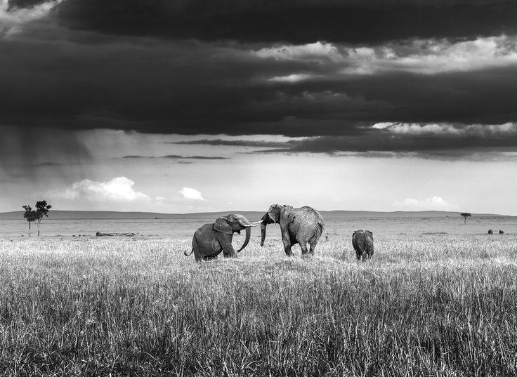 Elephant's game