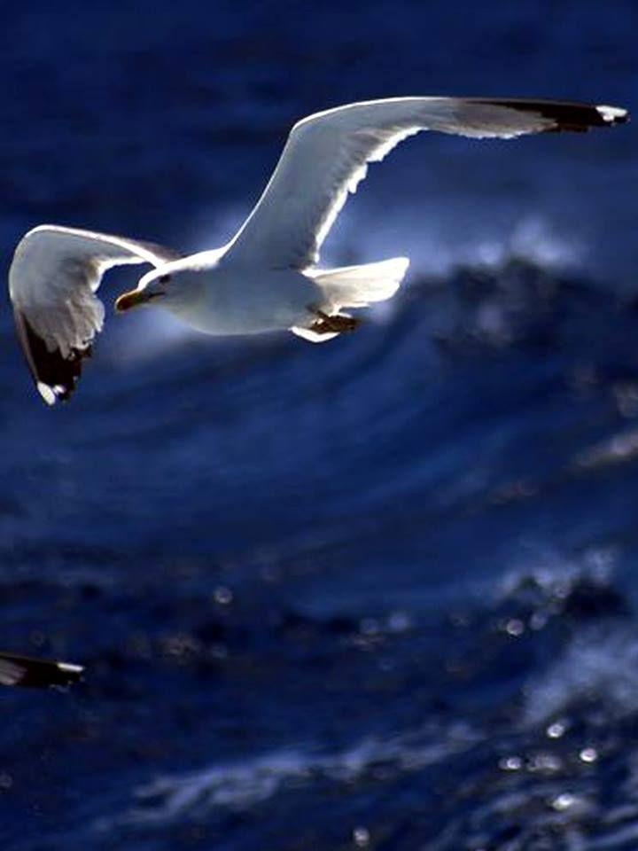 samarcanda:  e sull'onda di un mare limpido volerò.. sulle onde frastagliate scenderò.. e la mia pelle come piuma volerà… dal cielo all'a...