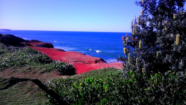 up at red cliff, the colours were startling
