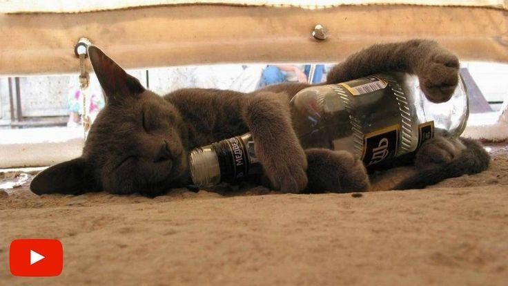 Kucing Yang Gagal Jadi Kucing | Video Hewan Lucu & Gokil Bikin Ngakak #1
