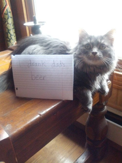 Best Cat Shaming Images On Pinterest Cats Cat Hair And - 31 photos that prove cats are actually assholes