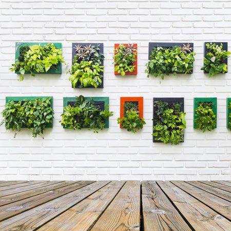 1000 id es sur le th me cadre succulente sur pinterest mur de plantes grasses jardins. Black Bedroom Furniture Sets. Home Design Ideas