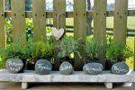 Welche Kräuter passen gut zusammen - nebeneinander pflanzen?