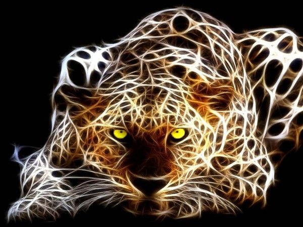 free animal wallpaper-leopard wallpaper hd