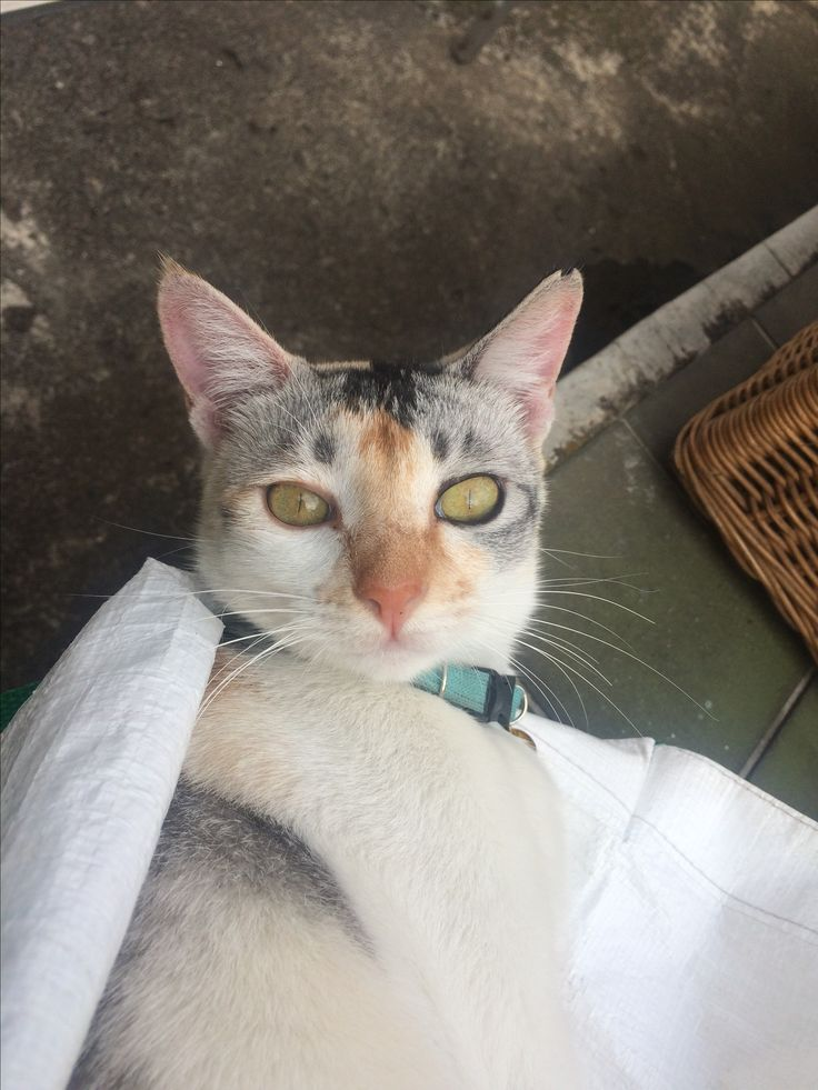 Salju's bold eyes ♥️