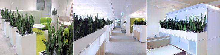 Union Investment - BAUMHAUS GmbH  Raumbegrünung, Innenraumbegrünung BAUMHAUS, Pflanzenpflege, Büropflanze, Hydrokultur, interior landscape, zimmerpflanze