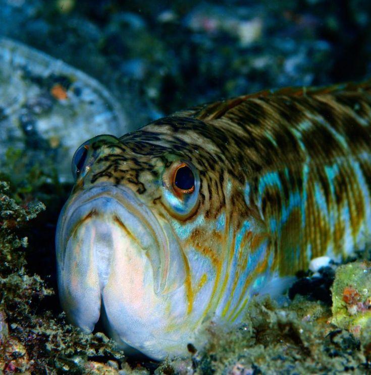 фото большой морской рыбы важный