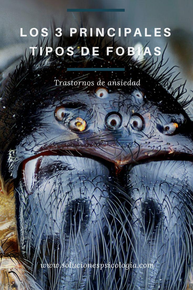 Tipos de fobias hay a montones. Arañas e insectos, alturas y espacios cerrados, inyecciones y sangre, o incluso a la gente,¿A qué le tenemos miedo? #fobias #psicología #miedo