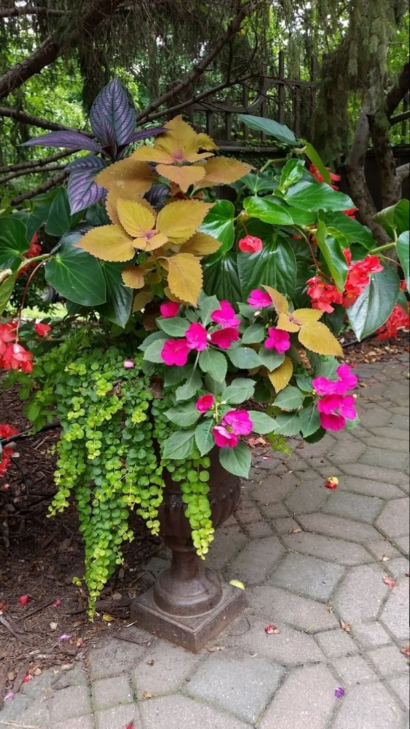 Potted Plants And The Necessary Spring Care: 3504 Best Container Gardening Images On Pinterest