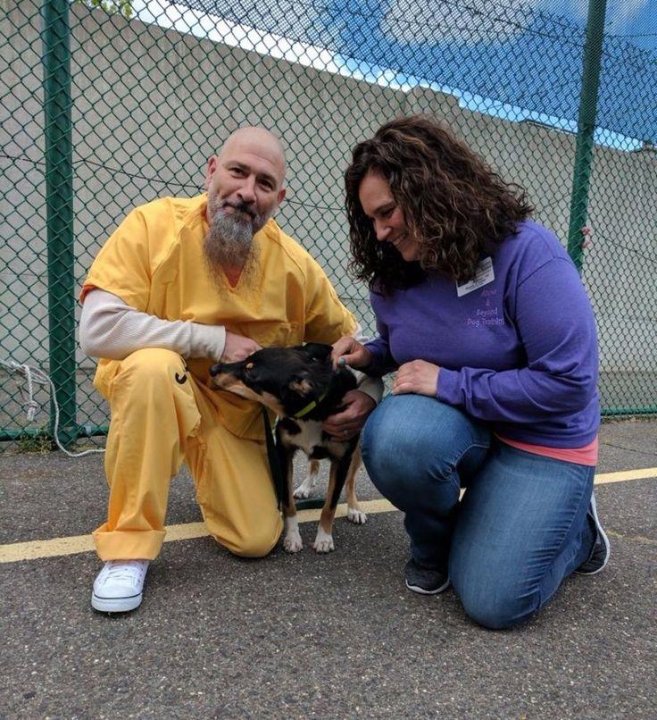 """Carcerati addestrano i cani ad assistere i malati di sindrome post-traumatica  Tutti hanno una seconda possibilità: è questo che stanno imparando i detenuti di una prigione del New Jersey, dove addestrano cani randagi ad essere cani di servizio per aiutare i veterani dell'esercito che soffrono di sindrome post traumatica da stress.    Il programma dura 12 settimane e i detenuti sono entusiasti. """"Questo programma mi sta aiutando a curare la mia dipendenza e anche la depressione. Gli animali…"""