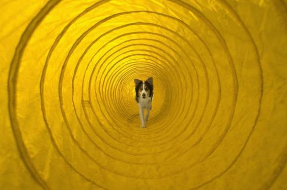 Getting Your Dog Started with Agility Training