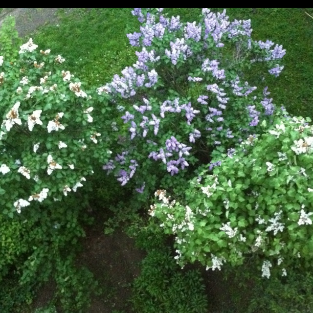 Famous Www.Beautiful Flowers Images Vignette - Best Evening Gown ...