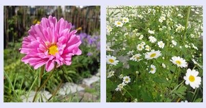 MIN VILLAHAGE: Sneglesikre planter