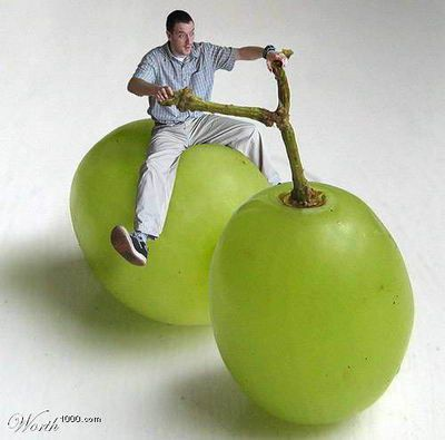 www.health-gossip.com Cool image..grape cycle.. #funny #images #jokes #grapecycle