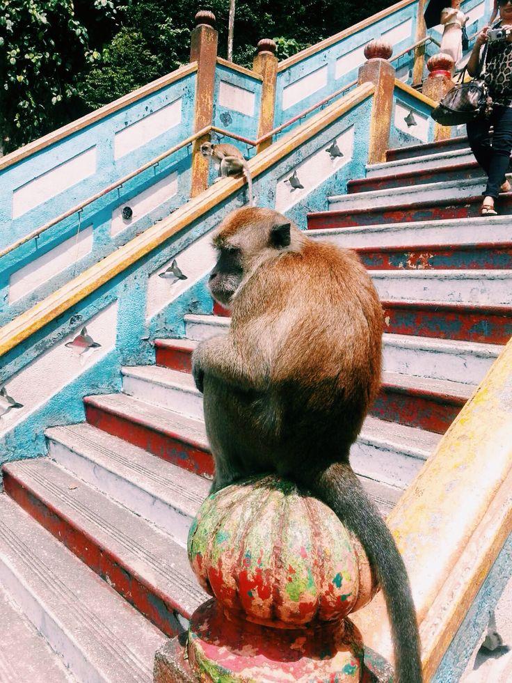 Monkey. Bantu caves