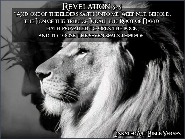 Image result for revelations bible lion