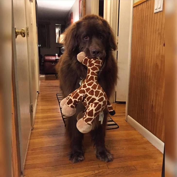 He just can't sleep without his giraffe.. - Imgur