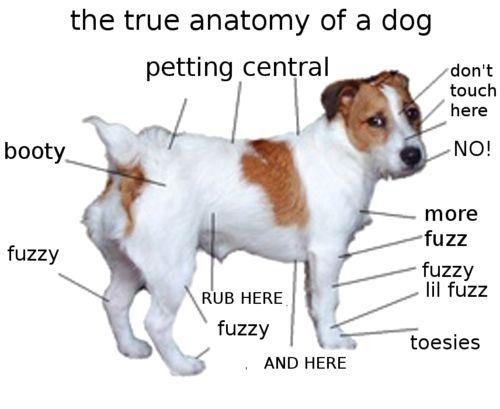 True Dog Anatomy Jack Russell Terrier Jack Russell Dog Anatomy
