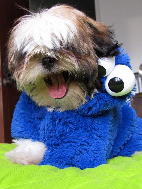 Happy Cookie Monster by HIADA, via Flickr #puppy #costume