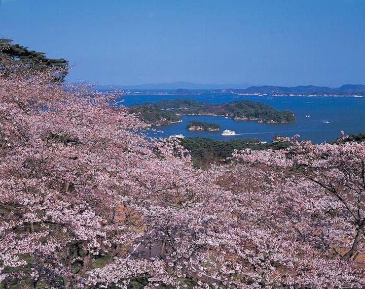 Japan S Cherry Blossom Calendar 2018 Seasonal Forecast And Best Spots Japan Travel Matcha Japan Tokyo Cherry
