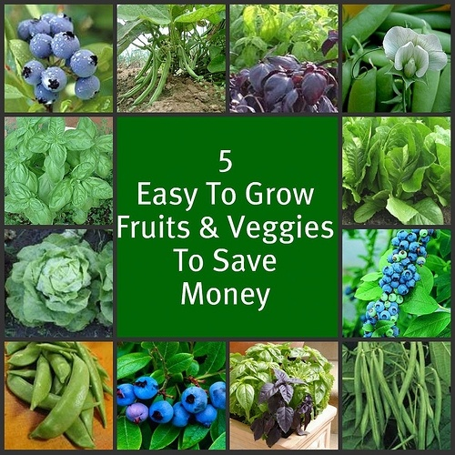 Save over 500 dollars on produce this summer - 5 easy-to-grow Fruits and Vegetables that will save your family a bundle!