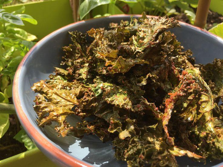 Connaissez-vous le kale ? C'est une sorte de chou frisé qui est très répandu dans les pays anglo-saxons mais il commence à apparaître à Genève ! Je vais suivre les conseils de Jean-Phil…